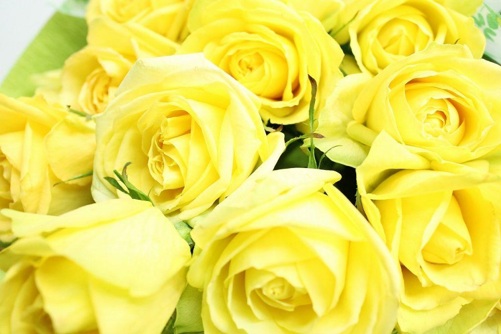 黄色いバラの花の画像