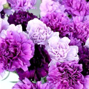 紫の花々の写真