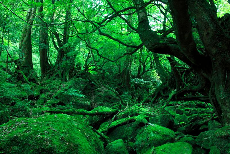 グリーンのイメージ写真